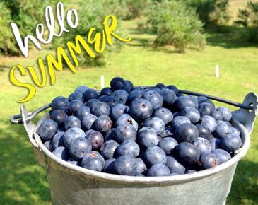 Bellevue U-pick Blueberry Farms