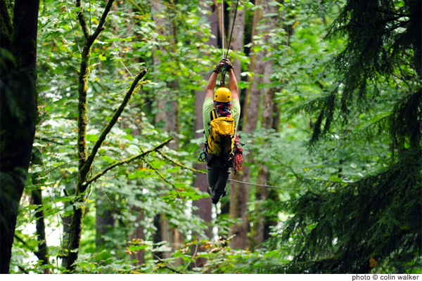 Bellevue Zip Tour 2020 | Bellevue.com