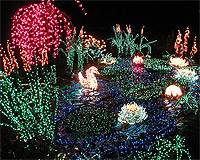 Bellevue Botanical Gardens Christmas Lights