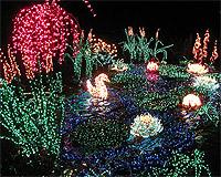 bellevue garden delights bellevuecom - Bellevue Christmas Lights