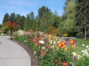 Northwest Perennial Alliance Fall Plant Sale | Bellevue.com